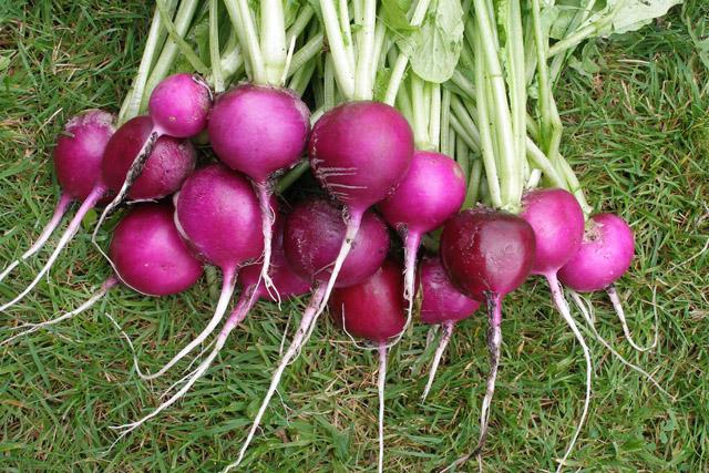 STADSODLING. Från frö till planta också i stan. Här Plum Purple, ekologiskt frö samt några fler några utvalda frönyheter. Foto Runåbergs fröer.