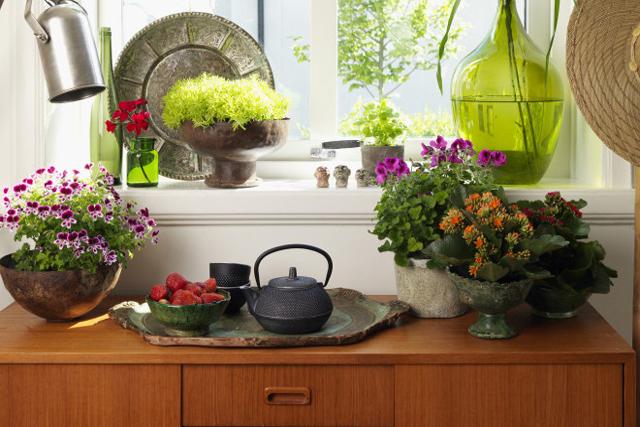 HEMMAFIX. Skapa trädgårdskänsla inomhus och inred med gröna växter. Här nedan några förslag på lättskötta trendiga grönväxter.Foto Blomsterfrämjandet/Peter Carlsson.